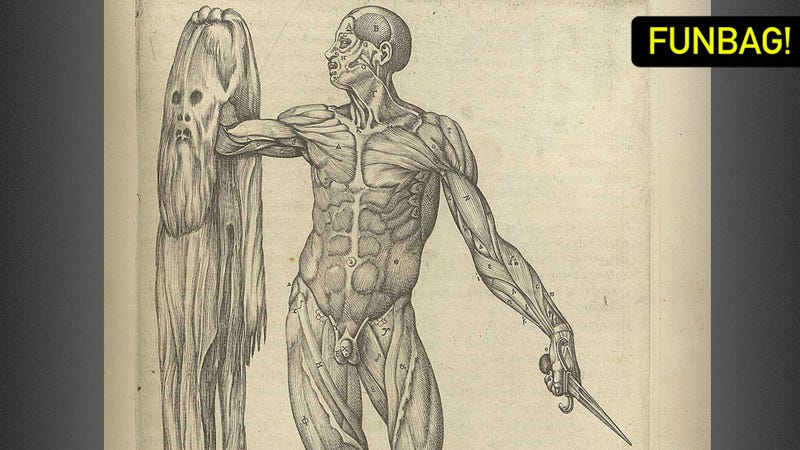 The Eight Most Important Organs In The Male Body