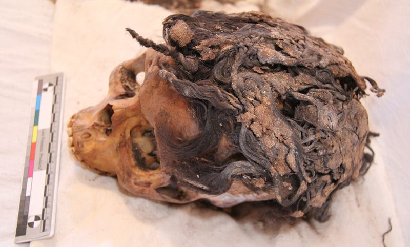 Illustration for article titled Skull Of 3,300 Year-Old Egyptian Woman Found With Hair Extensions
