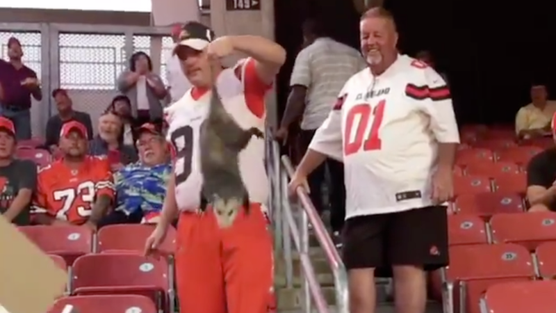 Illustration for article titled Browns Fan Saves Possum From Having To Watch The Rest Of Thursday Night Football