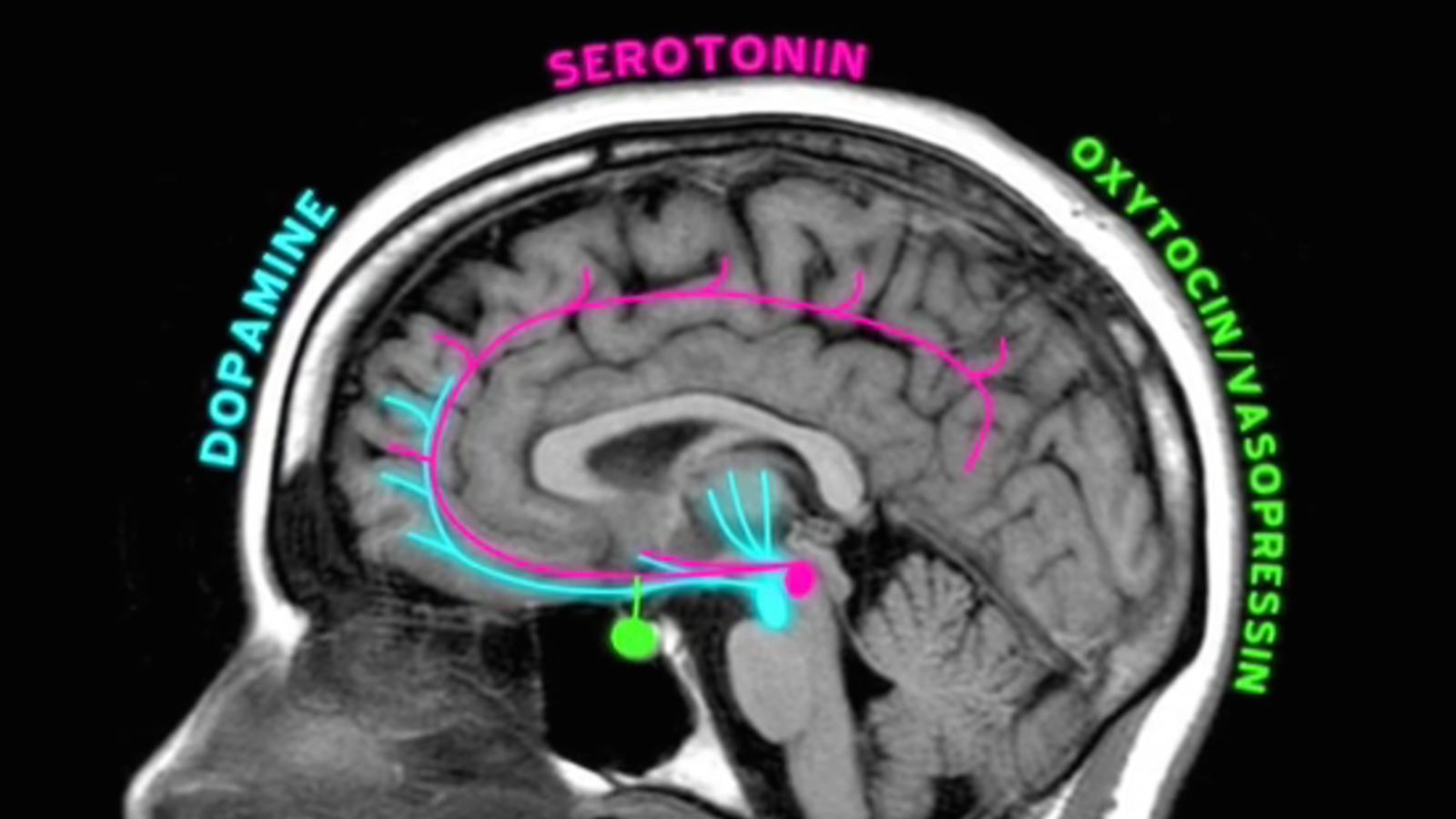 ¿Qué tipo de amor activa más las neuronas de tu cerebro?