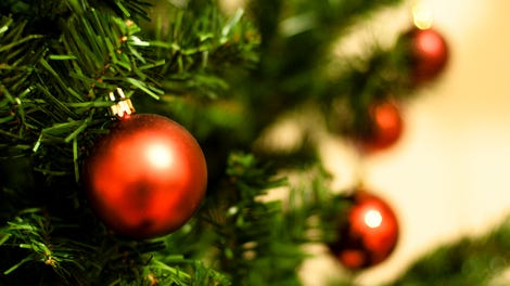 How to keep your christmas tree alive through the holidays how to choose the perfect christmas tree solutioingenieria Image collections