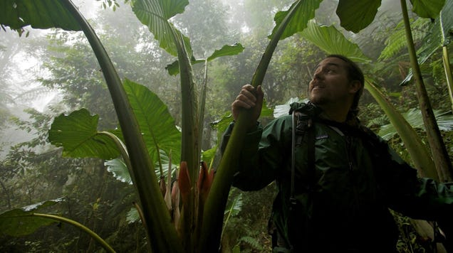 The 20-Year Quest to Track Down Every Bird-of-Paradise Species Before They Vanish