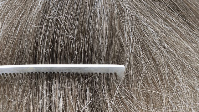 Reducing Stress Can Sometimes Reverse Gray Hair, Study Finds