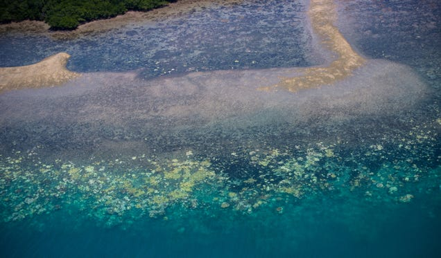 This Is Why the Great Barrier Reef Is Dying