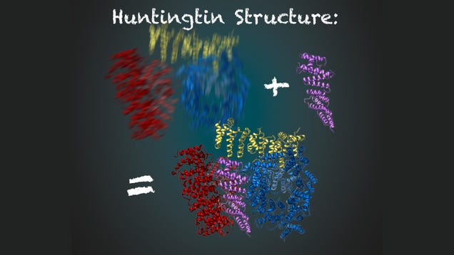 In a 'Key Milestone,' Scientists Get a Clear Look at Huntington's Disease Protein