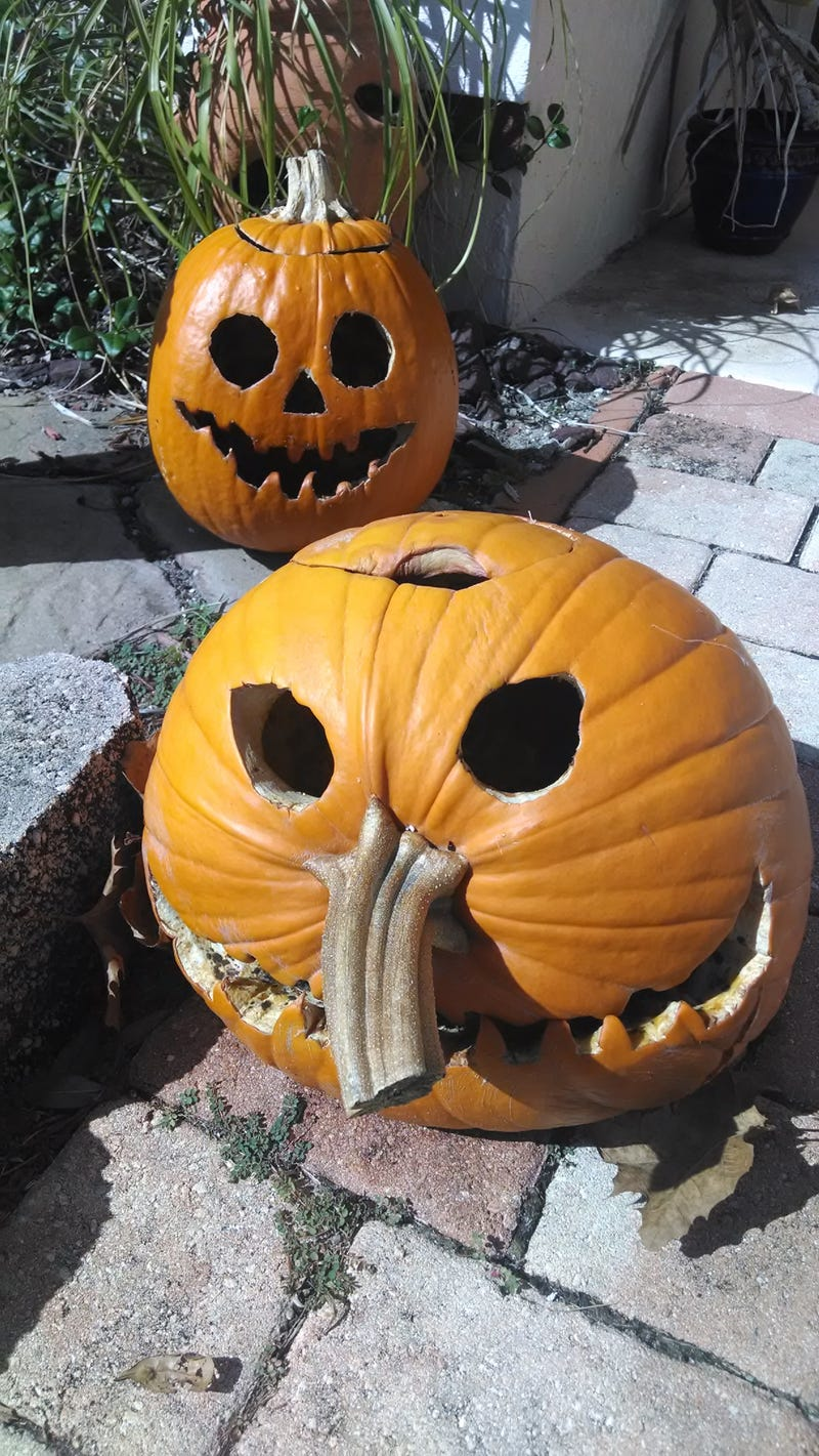 Illustration for article titled How are your Jack O'lanterns doing?