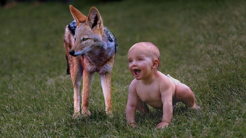 Illustration for article titled Cuteness Overload: This Baby And This Jackal Came From The Woods And Are Best Friends
