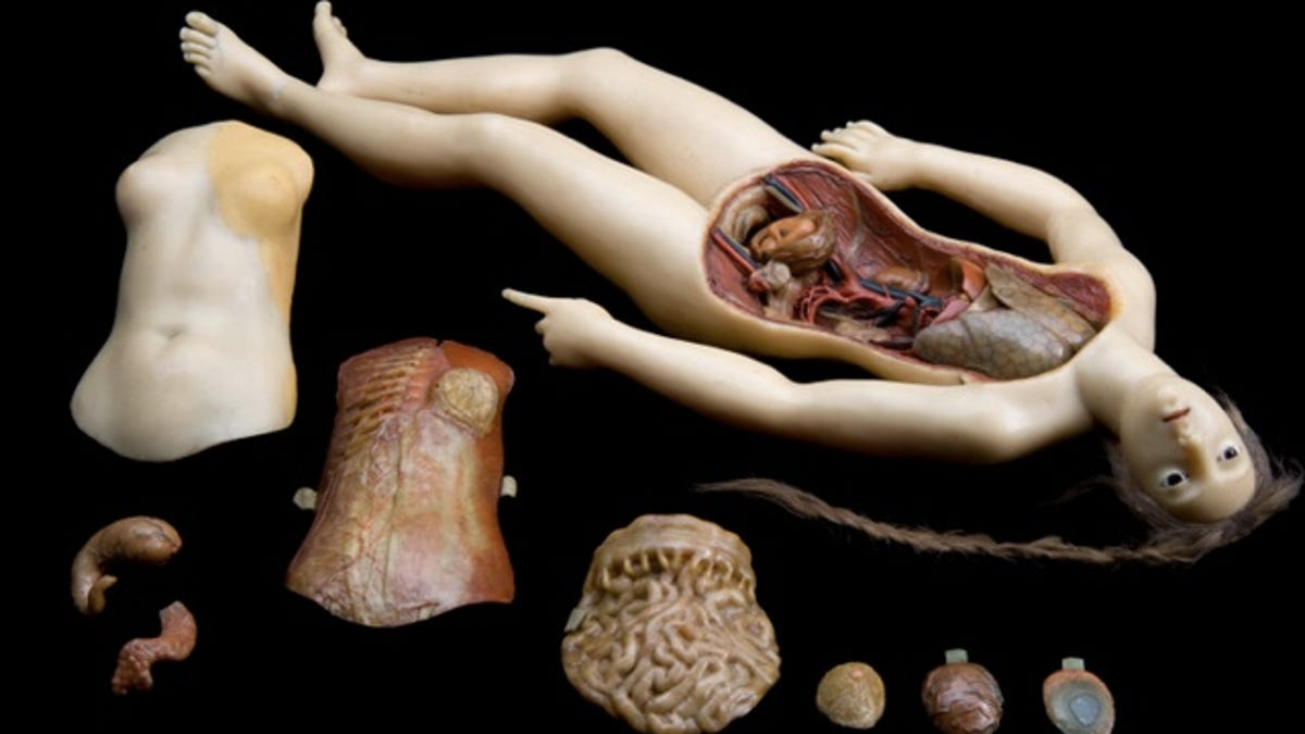 Creepy wax anatomy models from the 1700-1800s. Apologies if you ...
