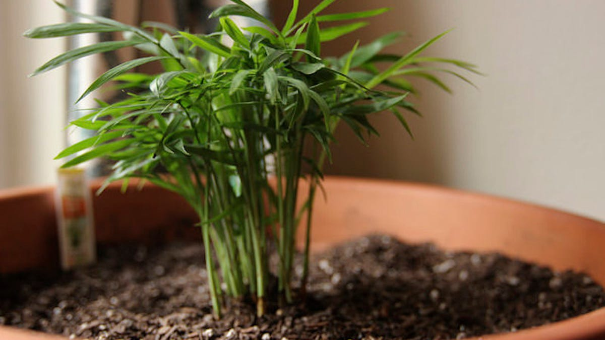 The Best Low-Maintenance, Pet-Friendly Houseplants Houseplants That Are Safe For Cats on safe indoor plants for cats, safe outdoor plants for cats, safe herbs for cats, safe vines for cats, safe food for cats,