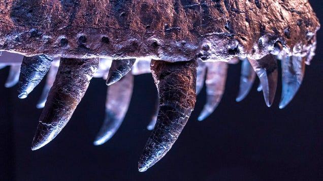Tyrannosaur Teens Didn't Have the Bone-Crushing Bite of Adults