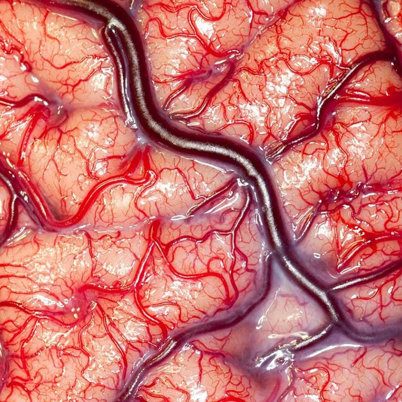 Illustration for article titled Extreme close up photo of a living human brain