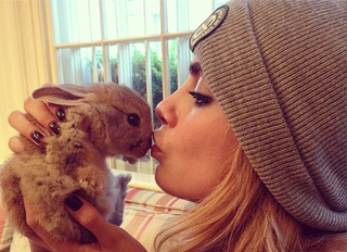 Illustration for article titled Stop Everything. Cara Delevingne Got a Bunny Named 'Cecil'