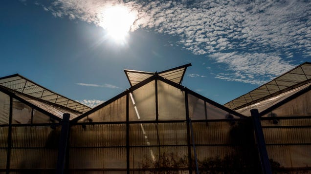 Tinted Solar Panels Can Help Farms Generate Clean Energy While Growing Food