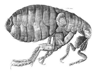 Illustration for article titled I Would Hurt A Flea