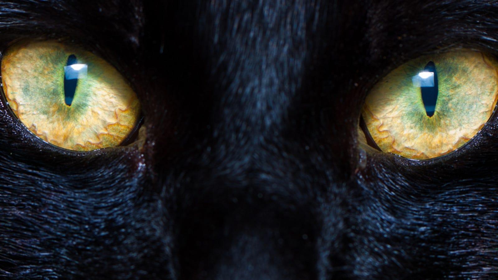 Los científicos que lograron ver a través de los ojos de un gato