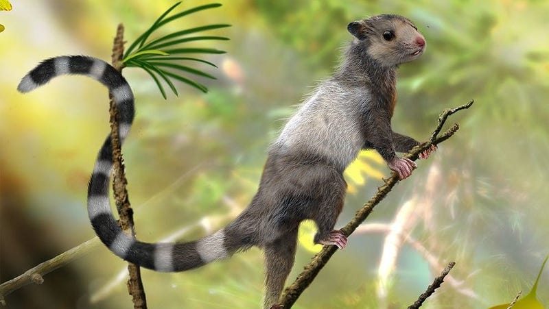 Artist's impression of the mouse-sized Xianshou Songae, a tree-dweller in Jurassic forests. (Illustration by Zhao Chuang)
