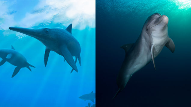 8 Wild Examples of Evolution Copying Itself