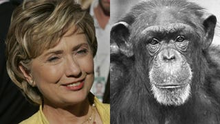 Illustration for article titled Hillary Clinton Can Win The Presidency, Sez Chimp