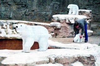 Illustration for article titled Robot Polar Bears: Less Dangerous Than Real Bears, For Now