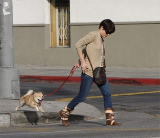 Illustration for article titled Cute, One-Eyed Pooch Upstages Selma Blair At Crosswalk