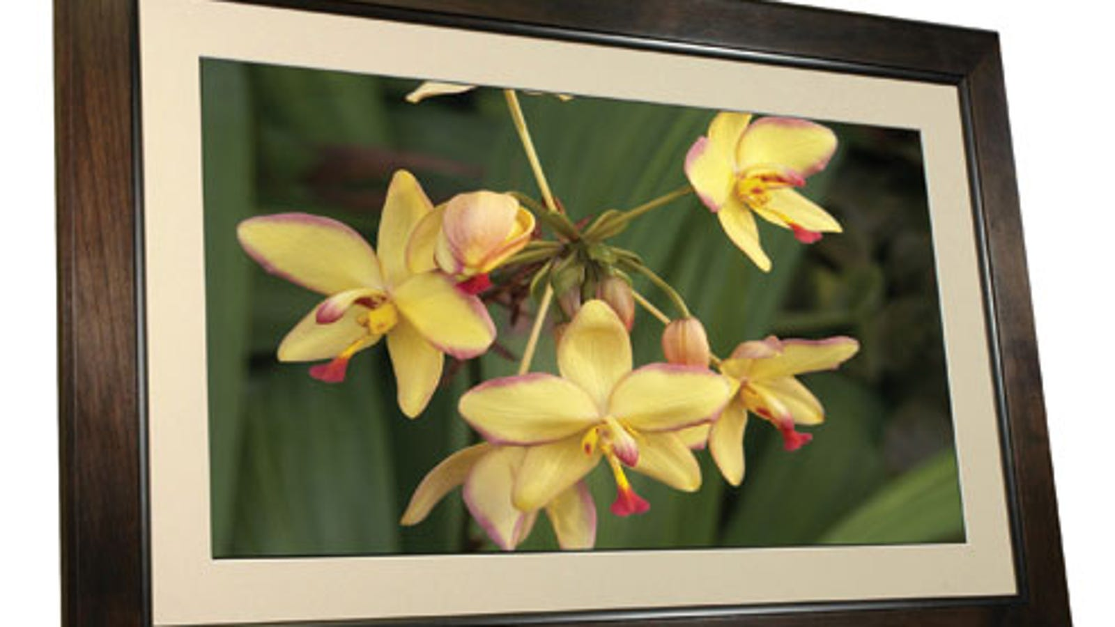 Smartpants 32-inch Wi-Fi Picture Frame...Can We Just Call It a TV?
