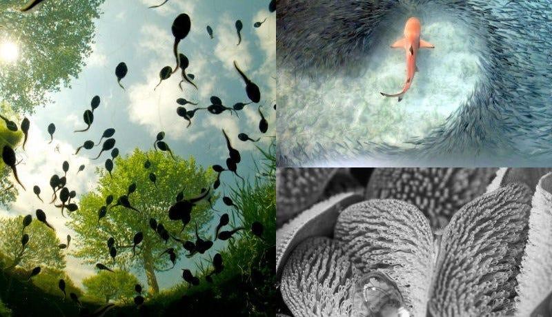Illustration for article titled Las fotos de naturaleza más espectaculares de 2015