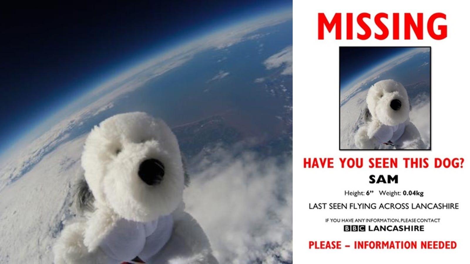 El perro de peluche perdido en el espacio que ha desatado una búsqueda frenética en Inglaterra