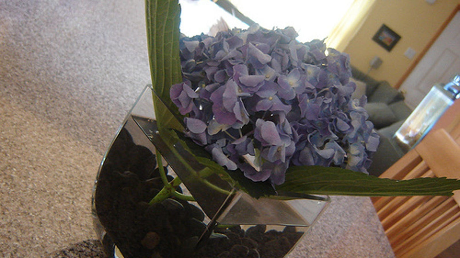 Keep fresh flowers lasting longer with crushed aspirin izmirmasajfo