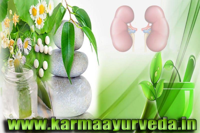 Illustration for article titled Get Best Kidney treatment in Ayurveda in India, Delhi   Karma Ayurveda