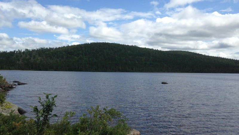 Study Finds Lakes Are Still Filled With DDT 50 Years After It Was Banned
