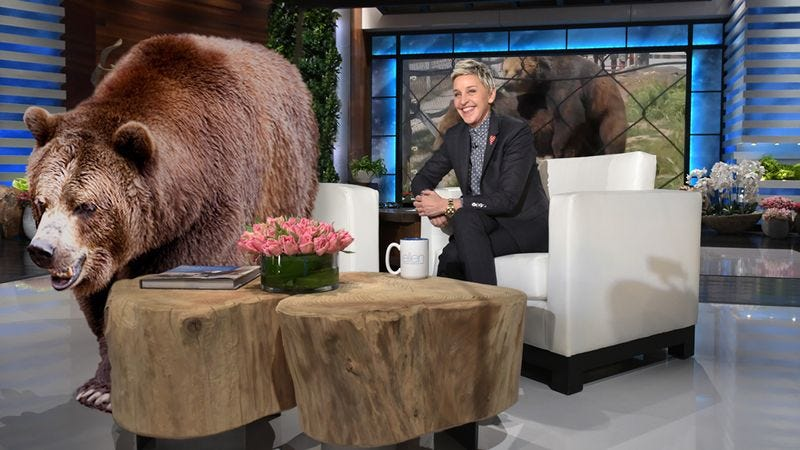Illustration for article titled So Cool! Ellen DeGeneres Just Invited The Bear That Had Sex In That YouTube Video On Her Show