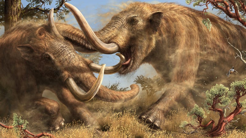 Illustration for article titled This Newly Discovered Mastodon Species Roamed California for Millions of Years