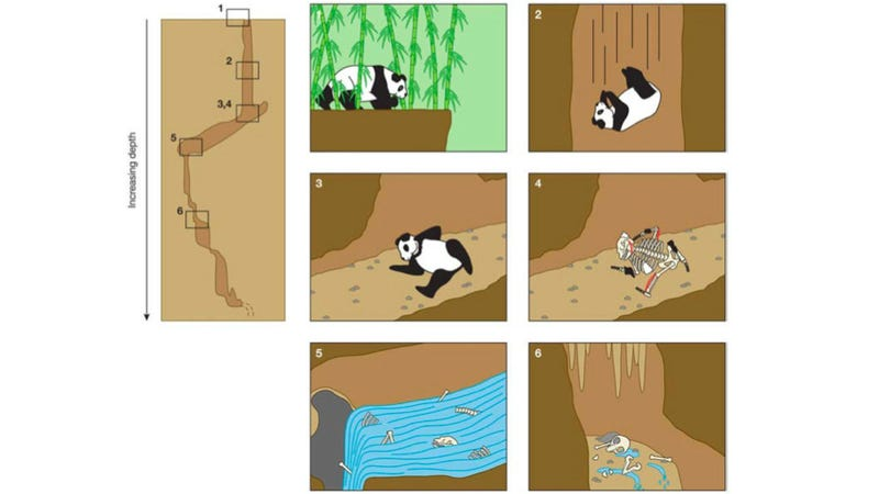 Illustration for article titled One of the best figures to ever grace a peer-reviewed scientific journal (warning: panda demise)