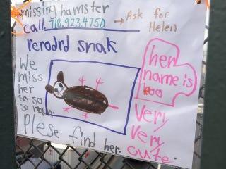 Illustration for article titled Please Help Find Helen's Pet Hamster Róó (?)