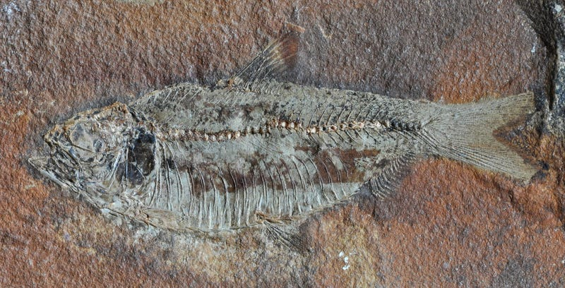 Some Good News About the Worst Mass Extinction in Earth's History