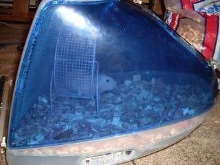 Illustration for article titled iMac Hamster Cage For Sale On eBay