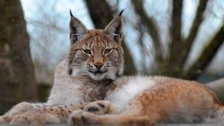 Image: Borth Wild Animal Kingdom