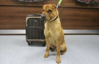 Illustration for article titled The Real Story of Why This Dog Was Abandoned With a Suitcase of Toys
