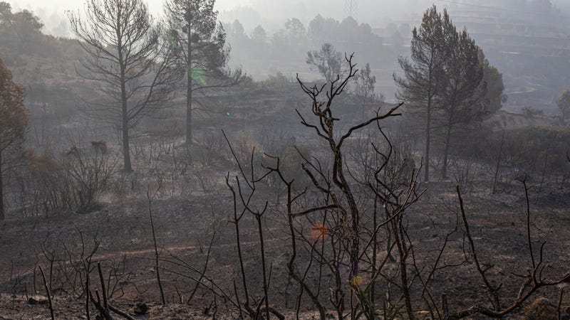 A burned landscape in Torre de l'Espanyol, Catalonia, where a wildfire erupted on Wednesday.