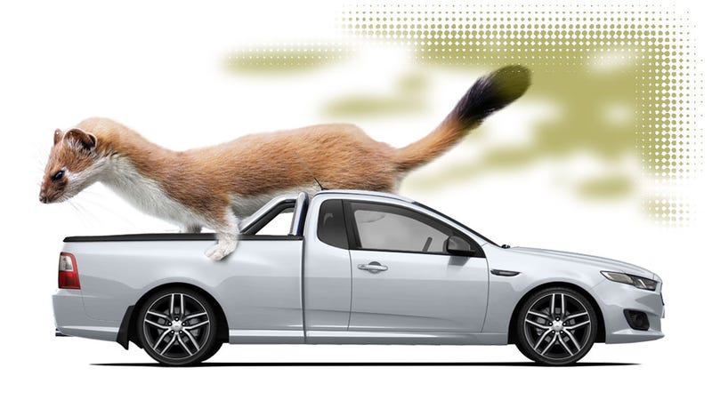 Illustration for article titled New Zealand Meth-Heads Break Into Car, Mistakenly Steal Weasel Ass Stink Oil: Report