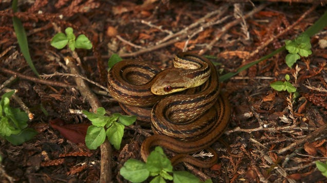 Snakes Are Monitoring Levels of Radioactivity