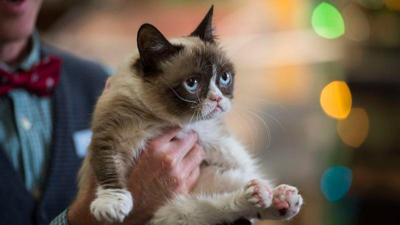 (Photo: Grumpy Cat's Worst Christmas Ever)