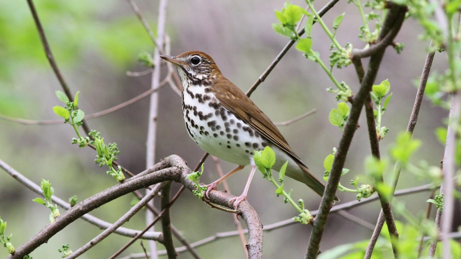 North America Has Lost Almost 30 Percent of Its Birds Since 1970, Upsetting New Study Finds