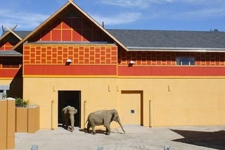 Illustration for article titled Two Elephants From San Diego Arrive At Los Angeles Zoo