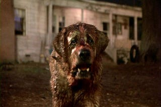 Illustration for article titled The Cujo Remake Has Taken a Very Weird, Astoundingly Dumb Turn