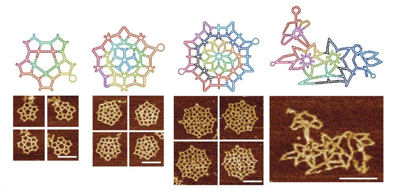 Illustration for article titled New DNA Origami Method Creates Amazingly Complex Molecular Structures
