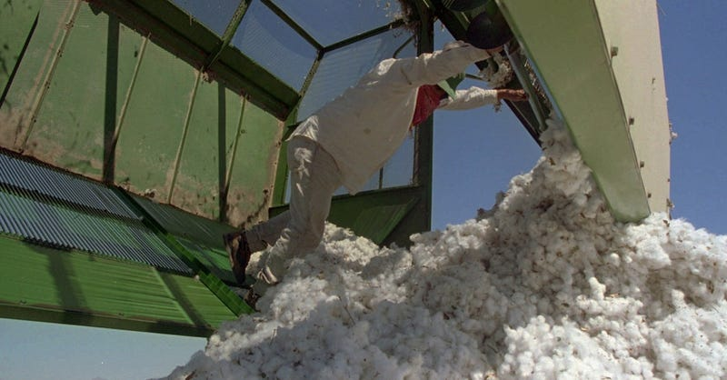 Illustration for article titled Government-Subsidized Cotton Farms Are Sucking the Colorado River Dry