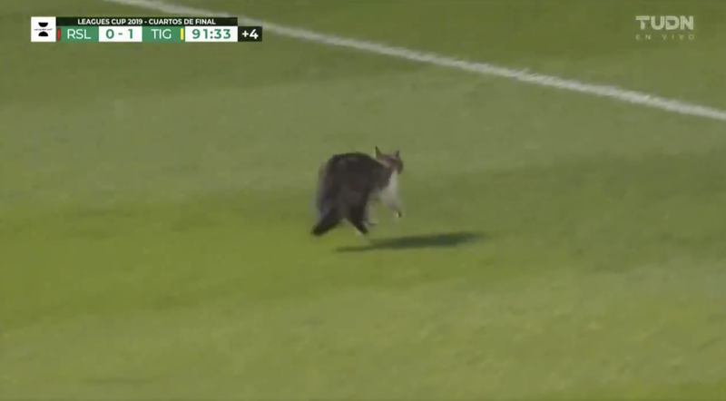 Illustration for article titled Idiot On The Pitch Is Nearly Trampled, Escapes Unscathed, Has Whiskers, Is A Cat