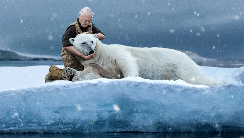 Illustration for article titled Shocked 'Our Planet' Viewers Watch As David Attenborough Enters Scene To Break Neck Of Starving Polar Bear