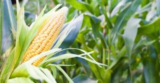 Illustration for article titled Este nuevo método de siembra podría hacer innecesarios los pesticidas